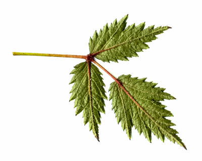 This image is not available